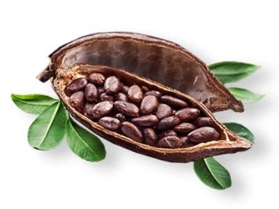 cabossa: il frutto da cui si ottiene il cacao STORIA_DEL_CACAO-min_76_11.jpg (Art. corrente, Pag. 1, Foto evidenza)